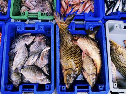 Livraison de poisson à domicile